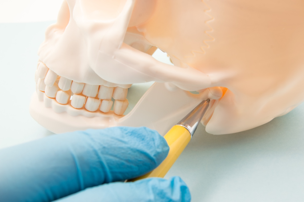 Understanding TMJ - Location of the Temporomandibular Joint